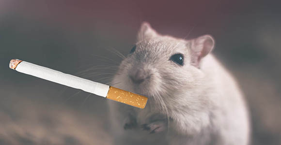smoking does not prevent dementia tobaccounpacked